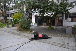 Perro de asistencia visita la Facultad en su etapa de sociabilización